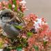 In bloom by rumpelstiltskin