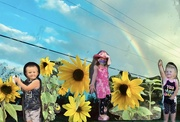 27th Sep 2021 - Sunflowers and rainbows