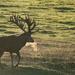 A breath of fresh deer by stevejacob