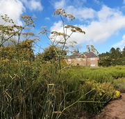 29th Sep 2021 - Garden Cottage