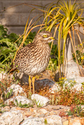 25th Sep 2021 - Daddy Thick Knee again