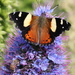 A new visitor to the echium by gilbertwood