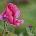 A Bit Of Cross Pollination _A013797 by merrelyn
