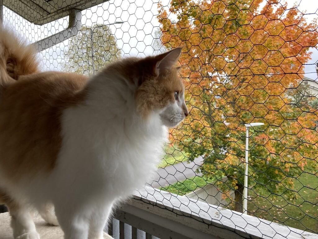 Sani and autumn  by katriak