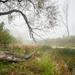 Oxbow lake in autumn  by haskar