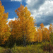 The Best of the Aspen by milaniet