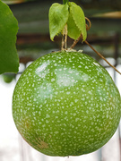 7th Sep 2021 - Passion-fruit.