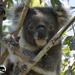 and Wilbur makes three by koalagardens