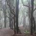 Misty Forest by yaorenliu