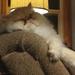 Let Sleeping Kittens Lie