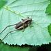 Weird looking bug! by bigmxx