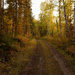 Old Logging Road by tosee