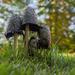 Giant Mushrooms by cwbill