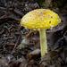 Beaver Island Mushroom