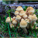 Family of Toadstools by hjbenson