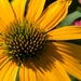 Pretty flower by mittens