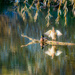 In autumn on the pond  by haskar