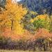 Squaw Creek fall colors