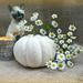 White Pumpkin.