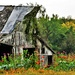 A Barn and Flowers by kareenking