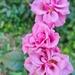 Flowers delight in October by evgeniamsk