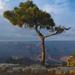 Lone Pine Edit