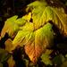 Fall has fell by teriyakih