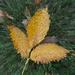 Leaf with filter