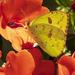 Orange & Yellow by kvphoto