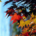 Fall Focus by seattlite