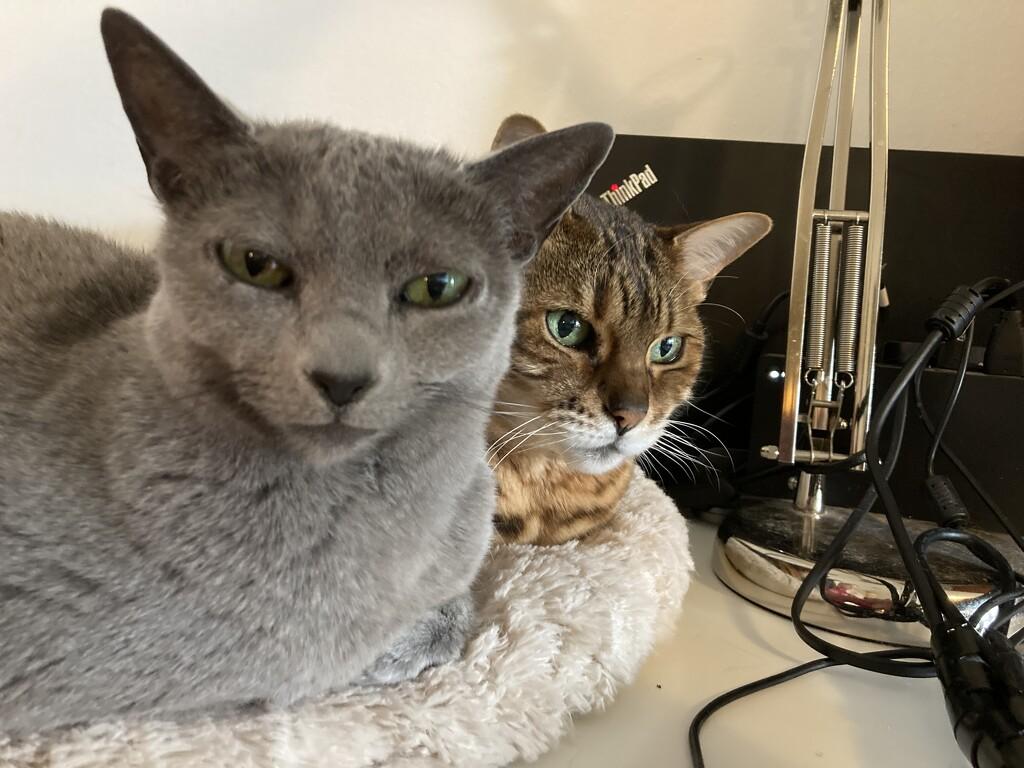 Working cats by katriak