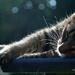 nap in the sun
