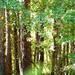 Arty woods...