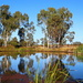Early Morning at the Barcaldine Waterhole by terryliv