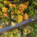 Kawartha Fall Colors