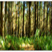 Forestry ICM by julzmaioro