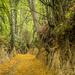 Loess ravine  by haskar
