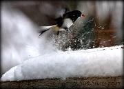 18th Jan 2011 - Snow Flurry