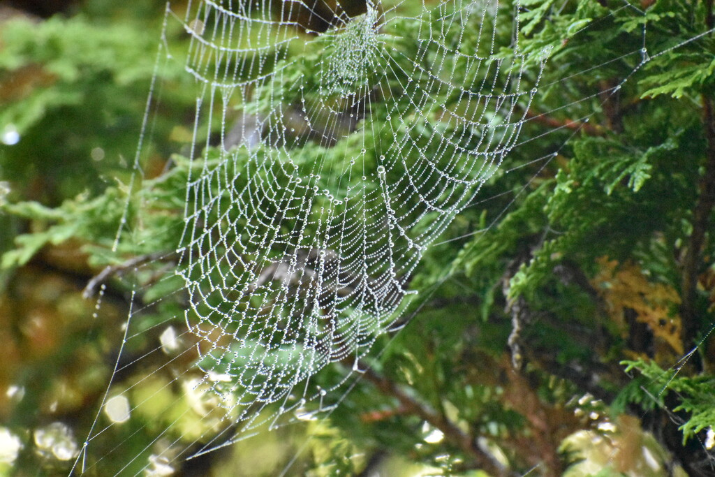 A spiderweb in the morning by midge