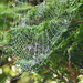 A spiderweb in the morning