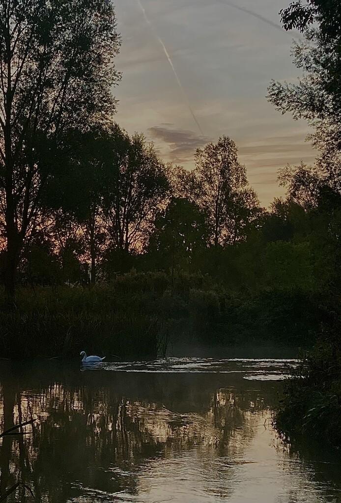 Swan before sunrise  by sianharrison