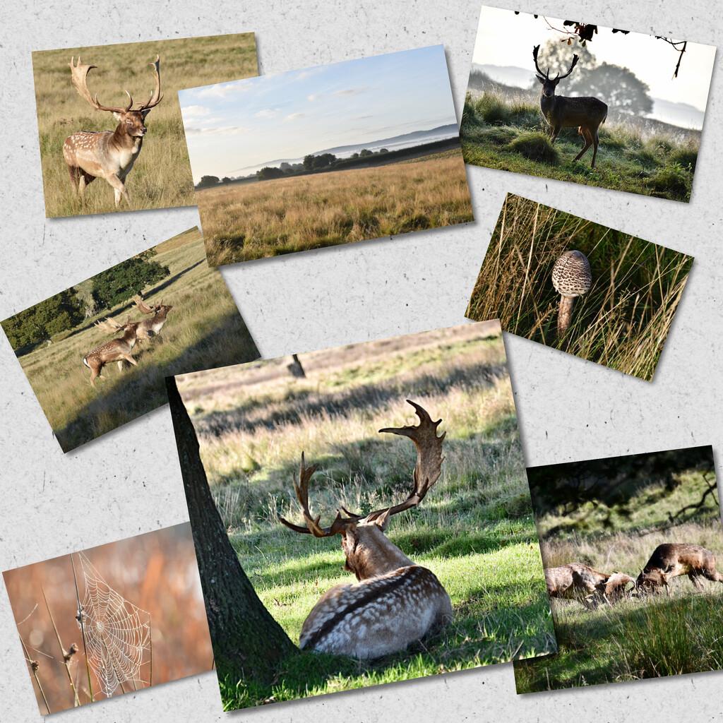 Visit to the Deer park  by wakelys