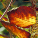 Leaf Art by seattlite