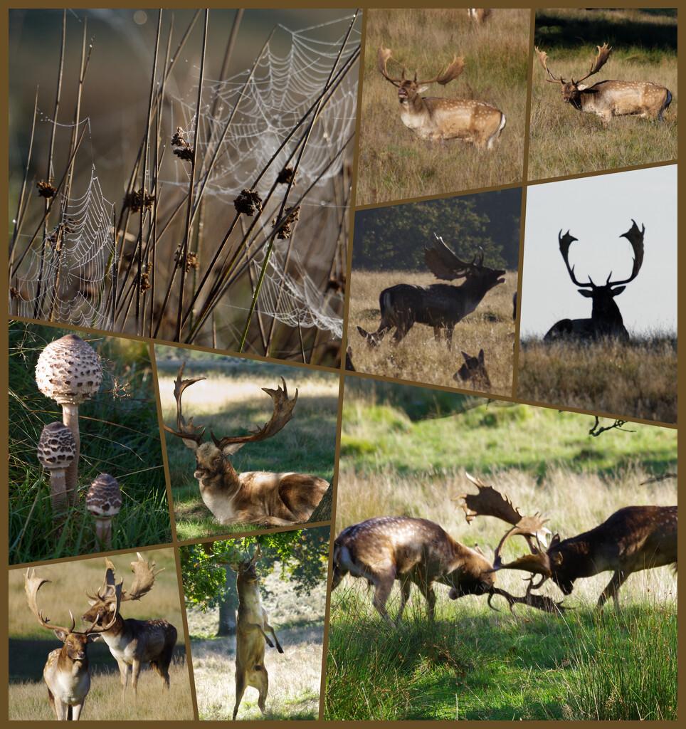 Deer, cobwebs, fungi and more deer by 30pics4jackiesdiamond