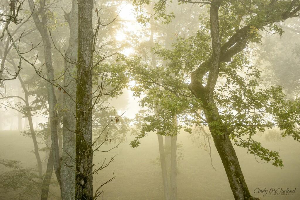 Layers of fog by cindymc