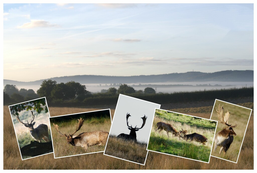 Good Morning Deer by 30pics4jackiesdiamond