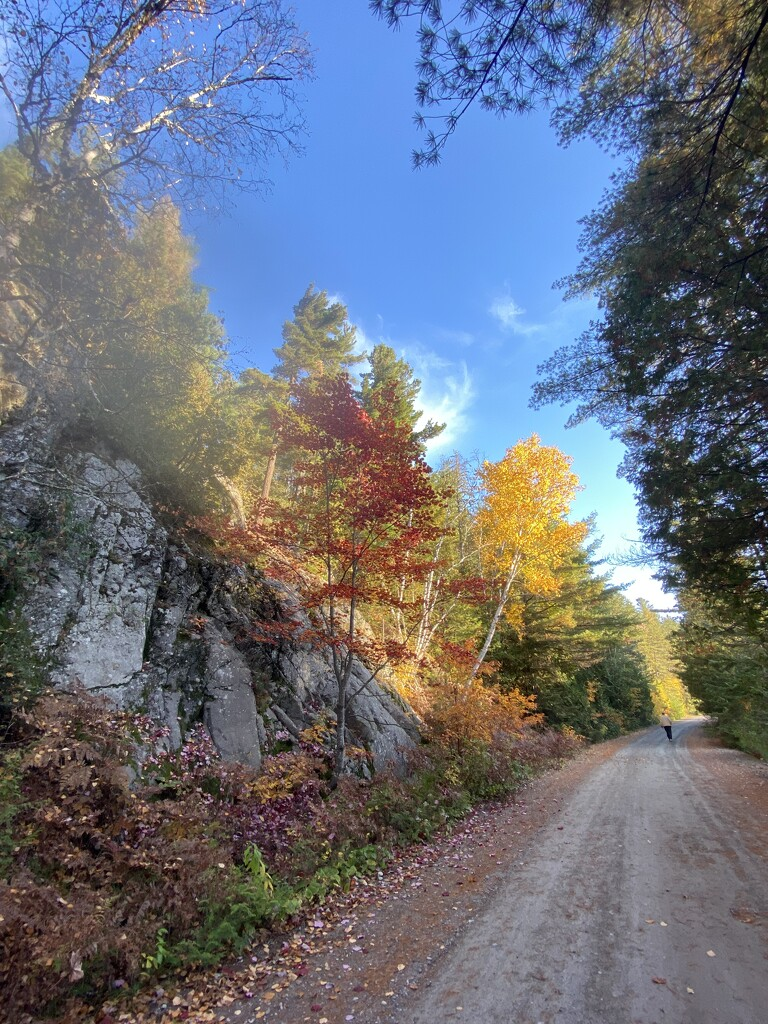 A Road of Fall Colours by radiogirl