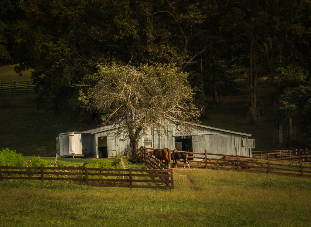 Horses down the road by randystreat