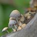 Mushrooms by fayefaye