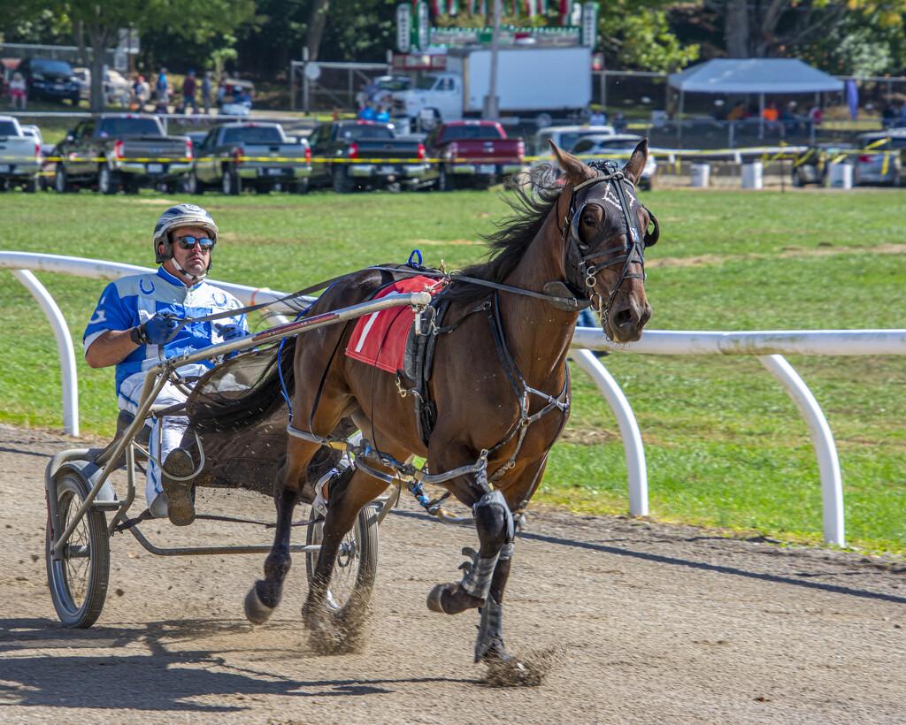 Harness Racing by cwbill